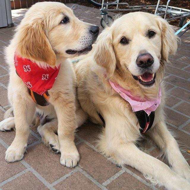 Bella and Harvey ❤