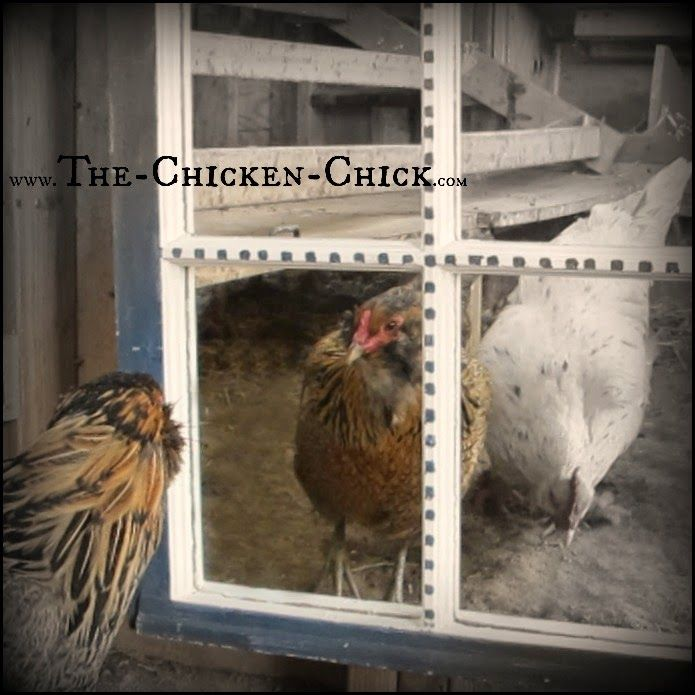http://www.the-chicken-chick.com/2015/02/20-winter-boredom-busters-for-backyard.html
