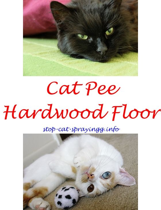 Cat spraying penis pee yahoo answers.Keeping cat from spraying - How To  Stop Cat Spraying?. 6586604584 #CatRepellentSprayWalmart