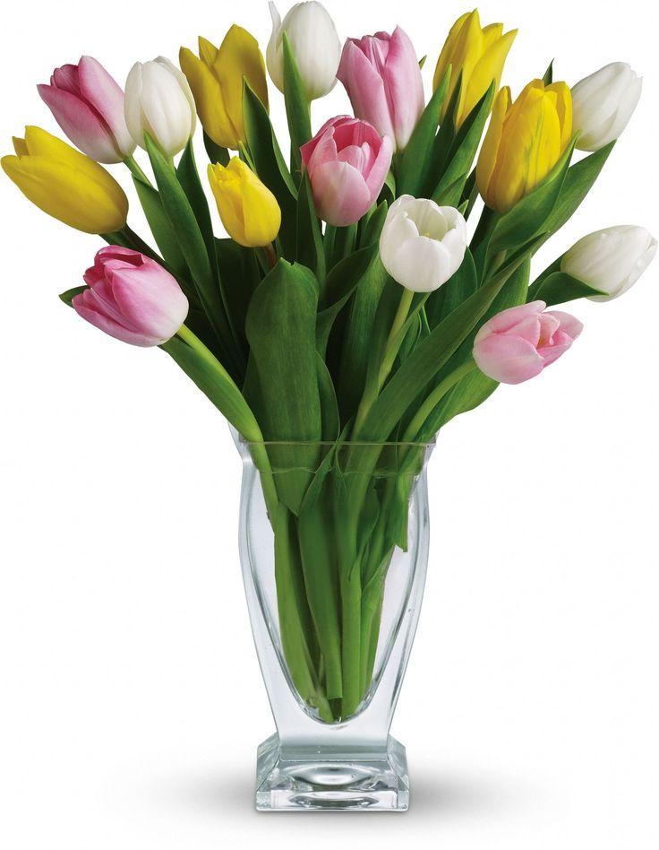 Telefloras Tulip Treasure Flowers Pinterest Flowers