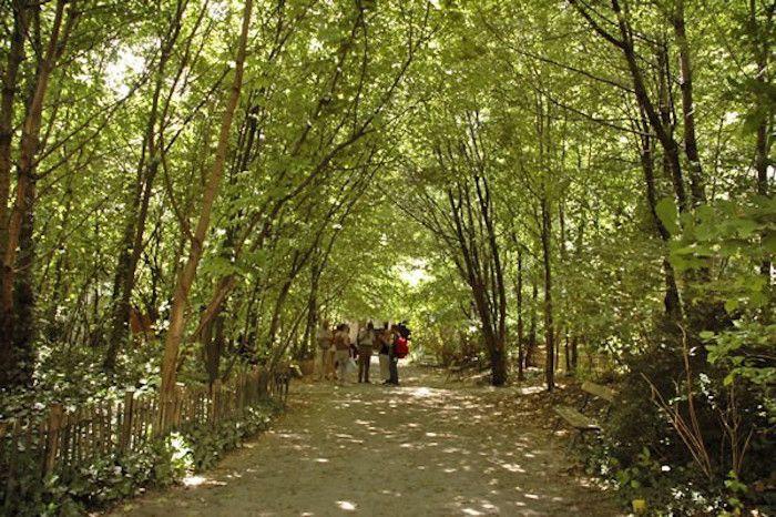 jardin-insolite-Paris-jardin-naturel. Adossé au Cimetière du Père Lachaise, le jardin naturel tranche avec les autres parcs de Paris. Ici  tout est déstructuré, l'homme n'intervient pas (pas d'arrosage ni de tonte), la nature est reine. Le résultat est très dépaysant : libellule, prairie, mare, herbes folles, et pourtant vous êtes toujours dans la ville. Un voyage étonnant si vous passez dans le quartier, surtout les jours où