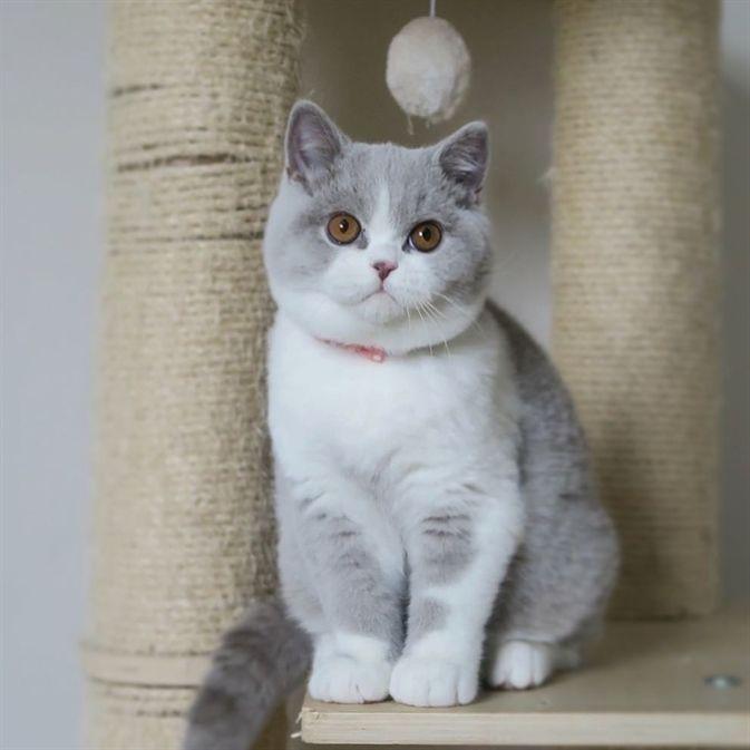 6 Delicious Ideas Cat Room Garden Cat Diy Life Cat Girl Plays Big Cat Leopard Cuddly Cat Breeds Munchkin Cat British Shorthair Cats Cute Cats