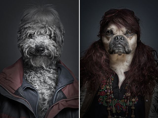 The Underdogs:  Photoshop trickery, Swiss photographer Sebastian Magnani - splicing together canine faces onto their owners' bodies.  See side-by-sides... http://www.boredpanda.com/underdogs-dogs-dressed-as-their-owners-sebastian-magnani/