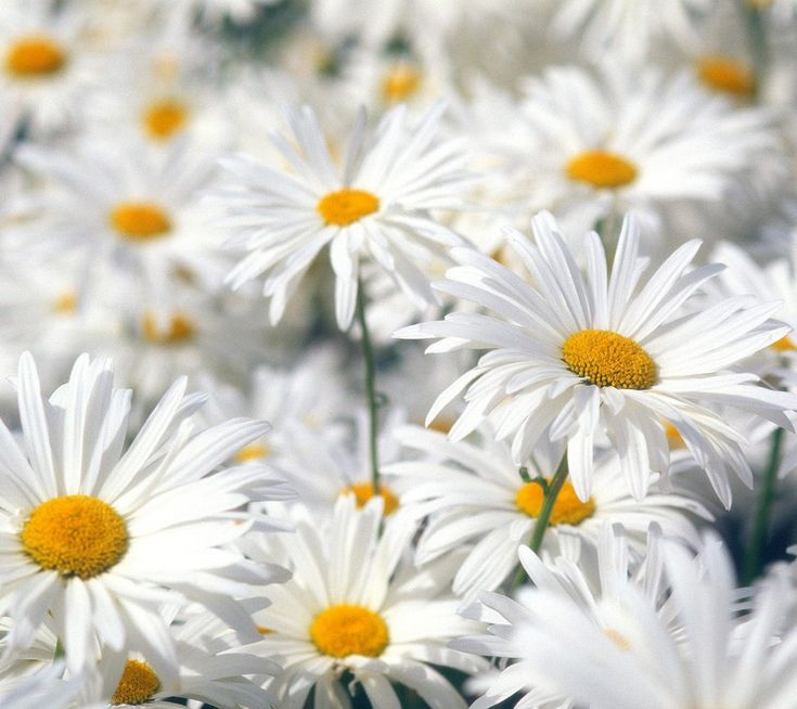 29 Best Images About Flower Quotes On Pinterest