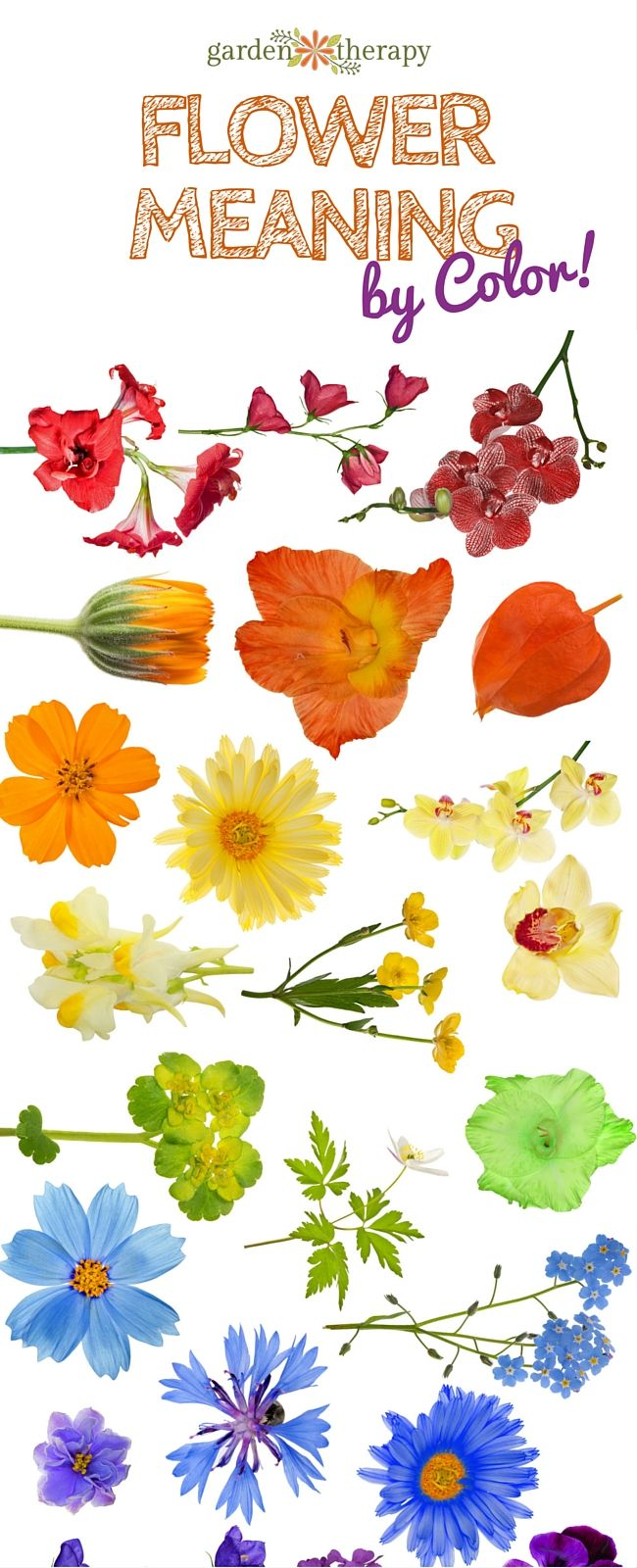 Best 20 meaning of flowers ideas on pinterest flower meanings best 20 meaning of flowers ideas on pinterest flower meanings rose color meanings and flowers and their meanings dhlflorist Images