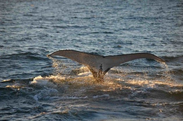 Whales in paradise keep our tour groups to an optimal size, ensuring all of our passengers enjoy optimal visibility and proximity to whales, dolphins, and the many other kinds of marine life they encounter.