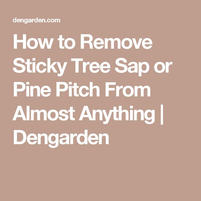 How to Remove Sticky Tree Sap or Pine Pitch From Almost Anything | Dengarden