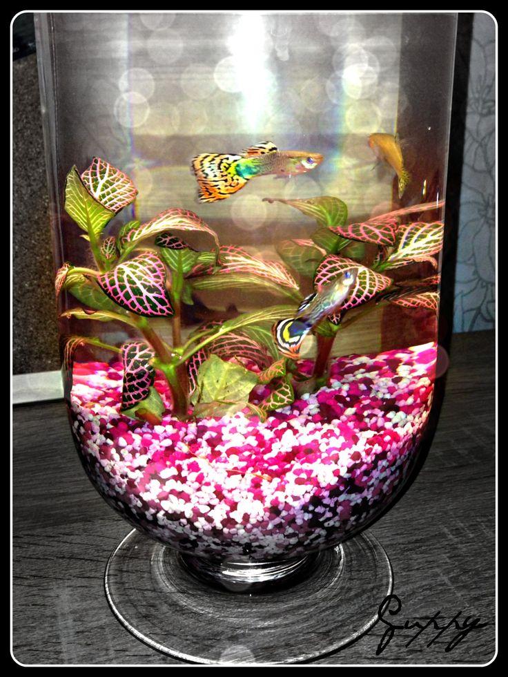 Fancy guppies tank the image kid has it for Fancy fish tanks