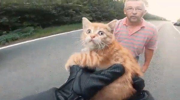 Biker Acts Fast To Save Scared Kitten In The Middle Of The Road Kittens Kitty Animal Advocacy