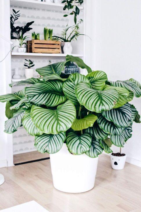 Über 30 hübsche Zimmerpflanzen für Ihr Zuhause – HOMEDECORSS