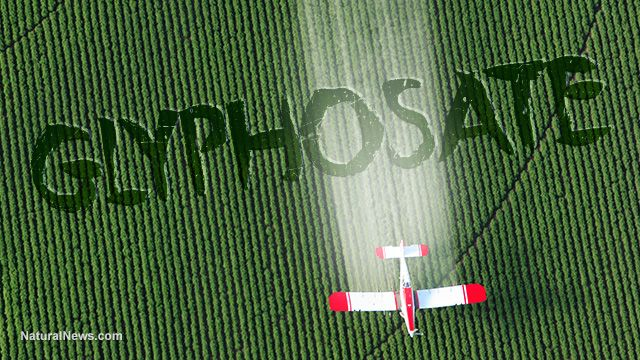 "Coincidence? Monsanto patented glyphosate as an ""antibiotic"" drug, claiming weed killer is medicine – NaturalNews.com"