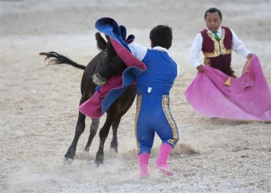 Dwarf bullfighter Jorge Vega (front) from Los Enanitos Toreros (Dwarf Bullfighters) performs a pass to a calf in Cancun May 29, 2011.  REUTERS/Victor Ruiz