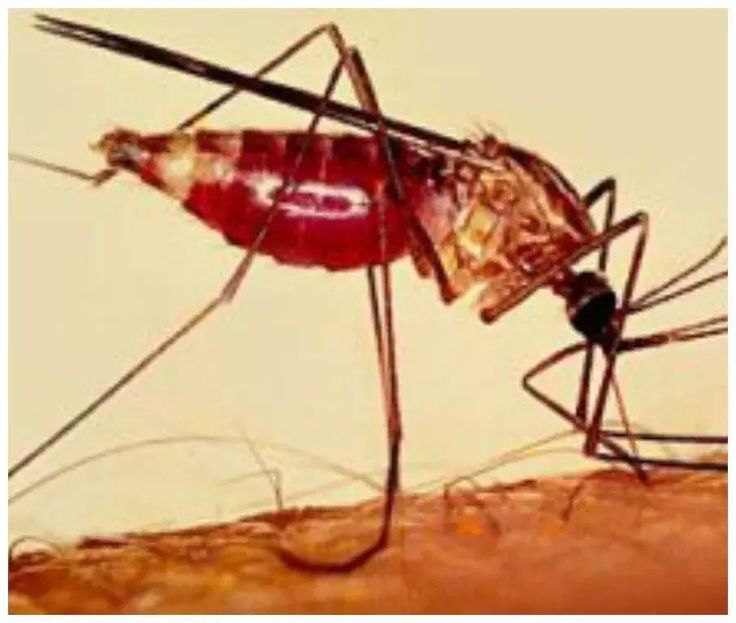 Nigeria to experience outbreak of dangerous malaria disease in 2017 (list of states to have high concentration) - http://www.thelivefeeds.com/nigeria-to-experience-outbreak-of-dangerous-malaria-disease-in-2017-list-of-states-to-have-high-concentration/