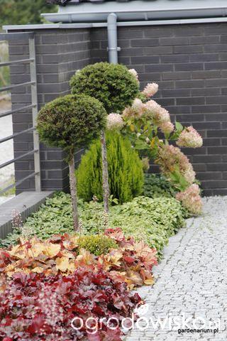 Ogród z lustrem - strona 239 - Forum ogrodnicze - Ogrodowisko