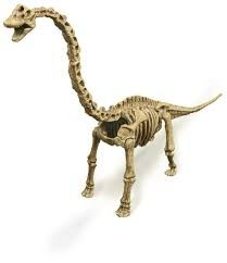 Image result for brachiosaurus skeleton on display