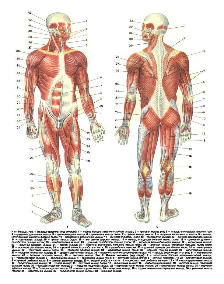 Wunderbar Ct Schulter Anatomie Zeitgenössisch - Menschliche Anatomie ...