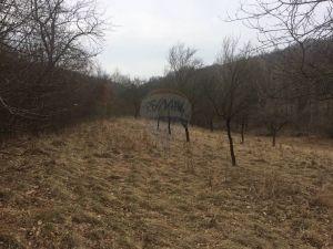 Veľký pozemok v obci Vrbovce s plochou 6229 m2