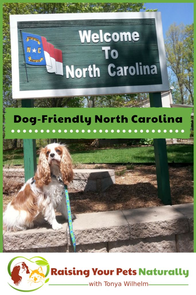 Dog Friendly Hotels North Carolina Beaches