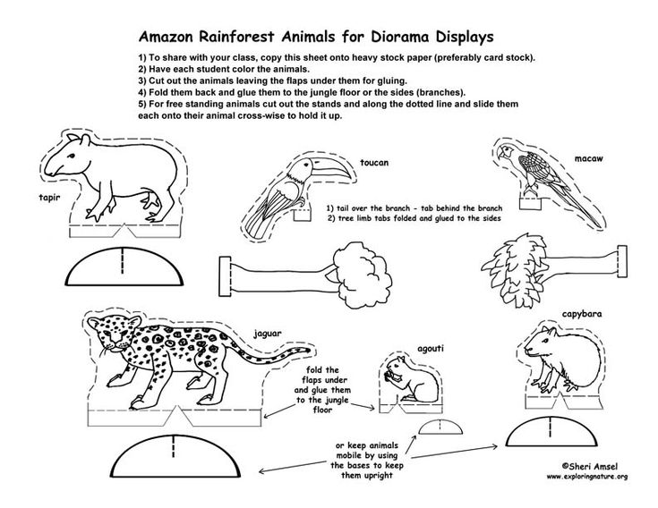 Rainforest Diorama printables Home/Schooling Pinterest
