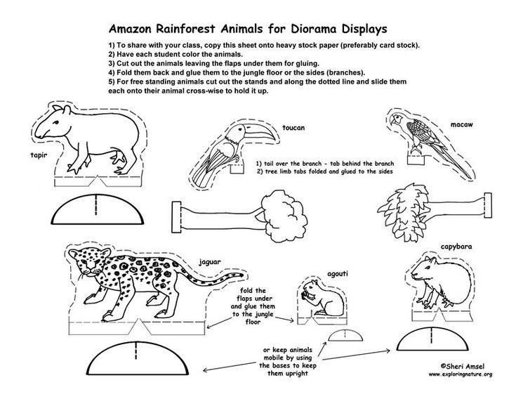 Rainforest Diorama printables Home/Schooling Pinterest