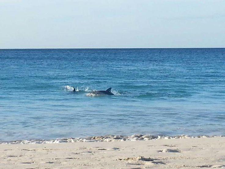 Dolphins at Dunsborough beach WA