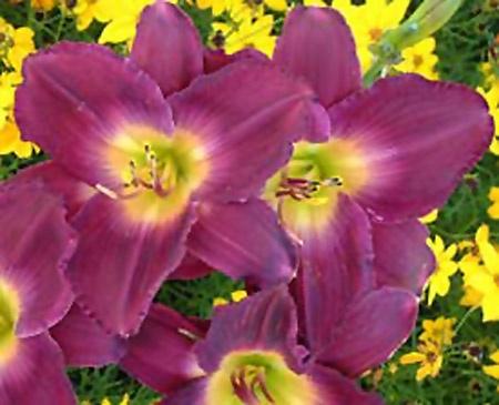 Flower Garden Ideas Minnesota 113 best flowers images on pinterest | flower gardening, garden