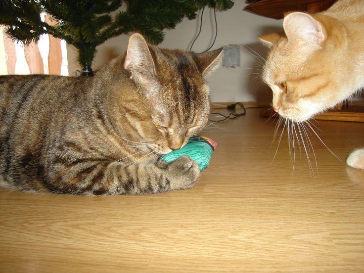 Moje kočka : Život s kočkou : Omamná vůně bylinek