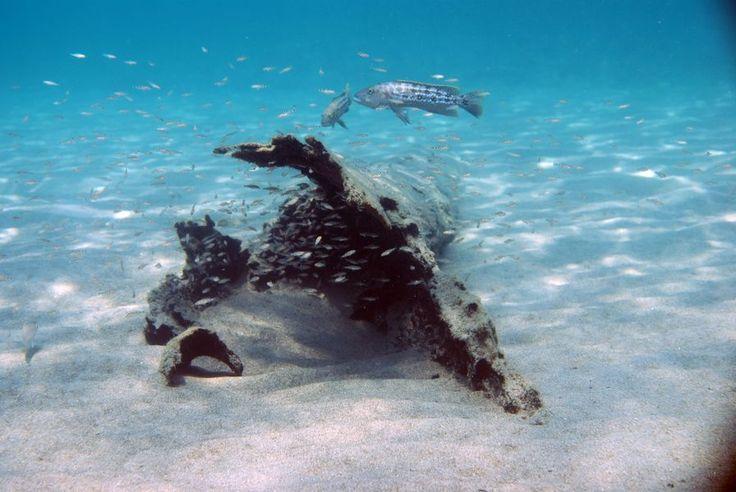 アフリカ タンザニア タンガニーカ湖には、珍しい魚が沢山の生息している。