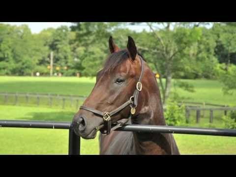 Ohio Horse Farm Auction | Eutrophia Farms Auction - YouTube. Love their use of land here!!