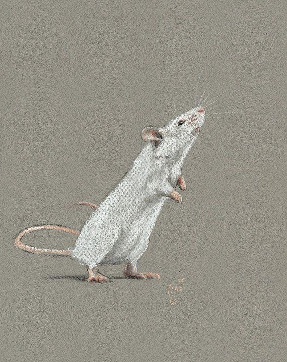Weiße Maus Zeichnung                                                                                                                                                                                 Mehr