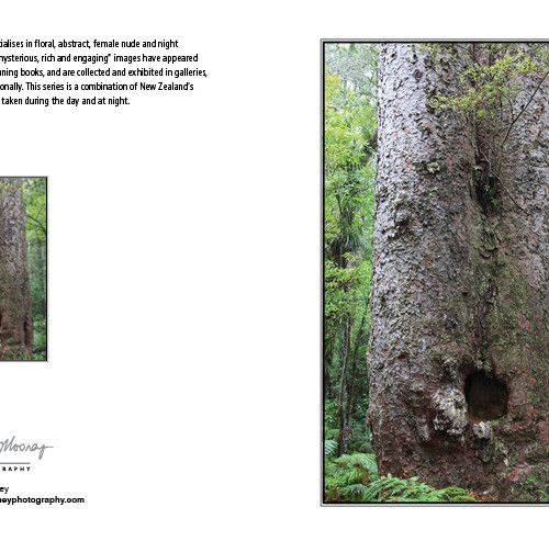 Photography Card-NZ Native Giant Kauri - Koru Enterprises