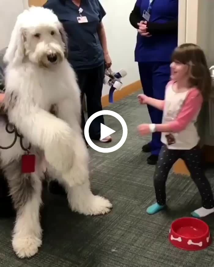 This Giant Doggo Puts A Smile On Everyone S Face Funny Animals