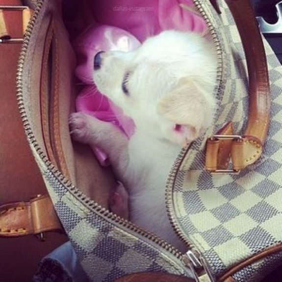 Louis Vuitton Handbags also make great puppy beds