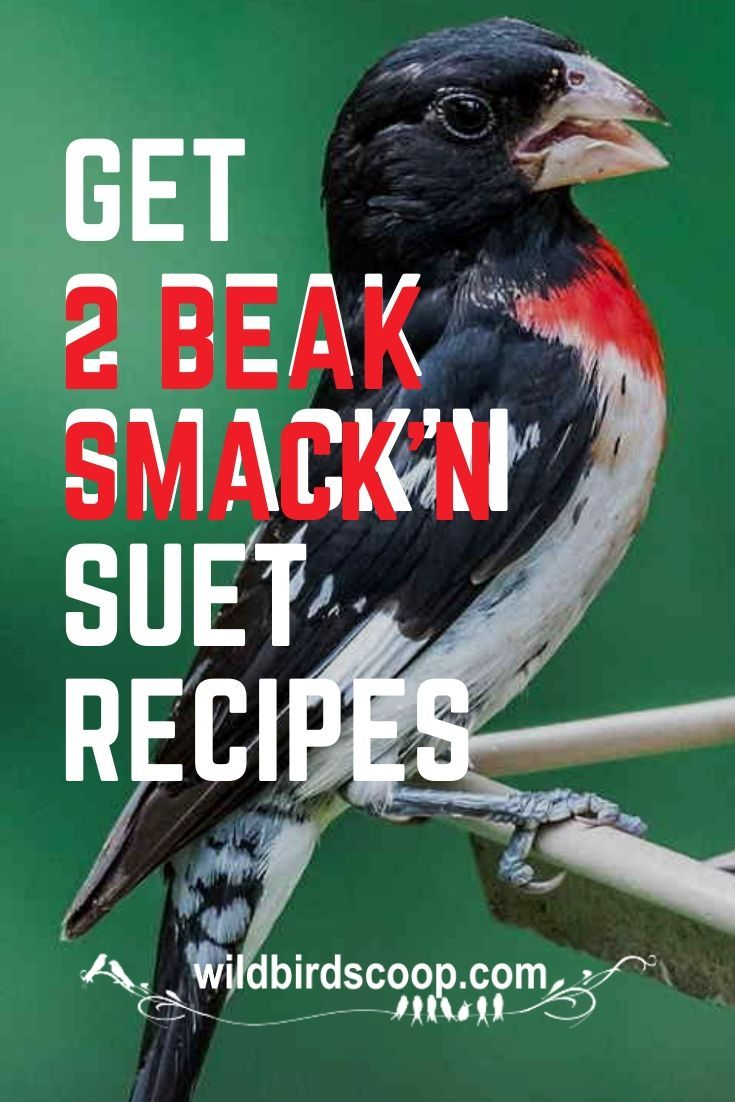 Recipes For Suet That Please Our Feathered Friends In 2020 Wild Birds Wild Birds Unlimited Wild Bird Food