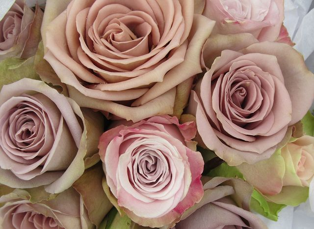 Wedding Bouquets Variety : Best rose varieties images on
