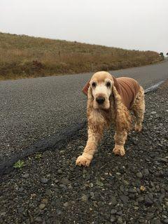 ニュージーランド在住26年。愛犬とのニュージーランドでの暮らしを紹介するブログです。