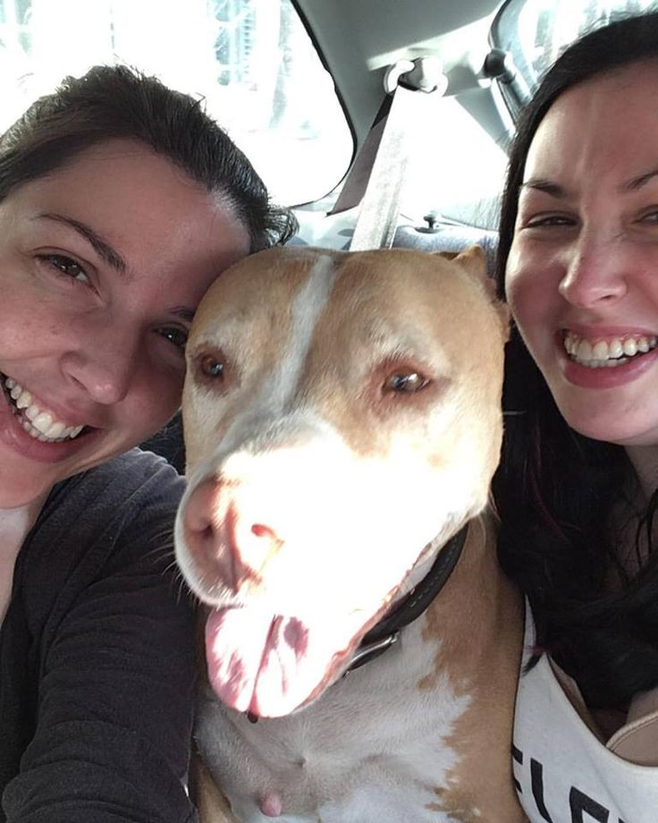 Co-founders of Pit Bulls and Personal Branding, Kelsey Prooker and Bri Prooker with their pittie-pie Ivy, KOTAW Content Marketing's Brand Ambassador. | Pittie selfie: No makeup, no filter, just love!