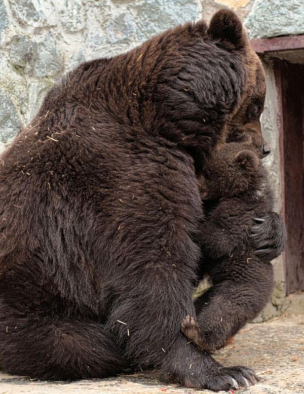 Miből lesz a kiscsibe,Fekete-fehér nyuszi,Cica és nyuszi,Nyuszi,Bárányok,Gyengéd medvemama,Tollászkodó hattyú,Alvó kiscica,Állatok - kacsacsőrű emlős,Állatok - hód, - jpiros Blogja - Állatok,Angyalok, tündérek,Animációk, gifek,Anyák napjára képek,Donald Zolán festményei,Egészség,Érdekességek,Ezotéria,Feliratos: estét, éjszakát,Feliratos: hetet, hétvégét ,Feliratos: reggelt, napot,Feliratos: egyéb feliratok ,Finomságok, kávék,italok képei,Gyász, emlékezés, képek,Gyászversek…