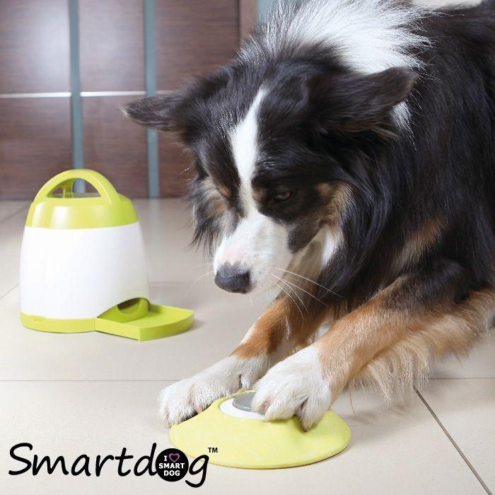 DogActivity Hukommelsestræner til hunde - Gratis levering