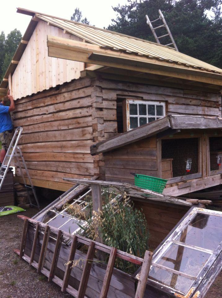 Nytt hønsehus, på Vestjordet under bygging.