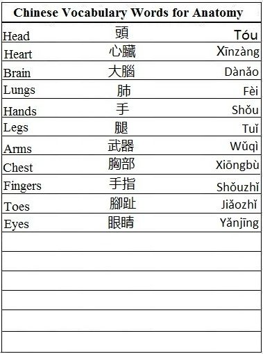 Chinese Vocabulary Words for Anatomy - Learn Chinese