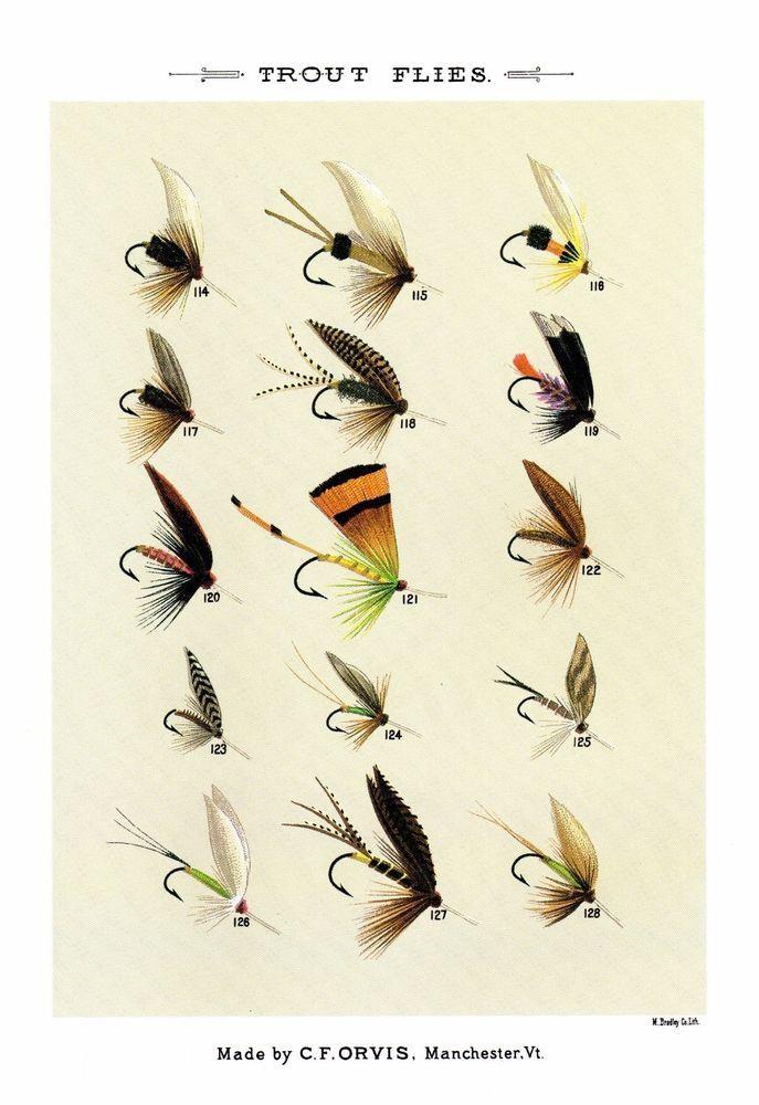 Vintage Trout Flies Print Vintage Fly Fishing Art Print Gallery Wall Art 2725o Fly Fishing Art Trout Painting Fish Art
