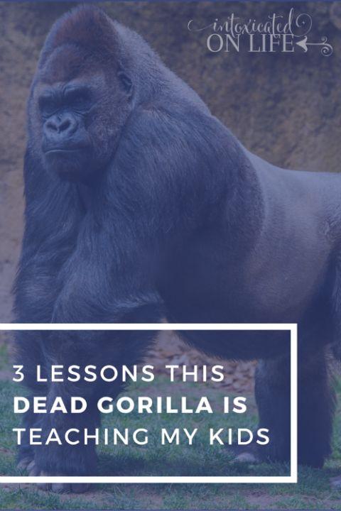 3 lessons this dead gorilla