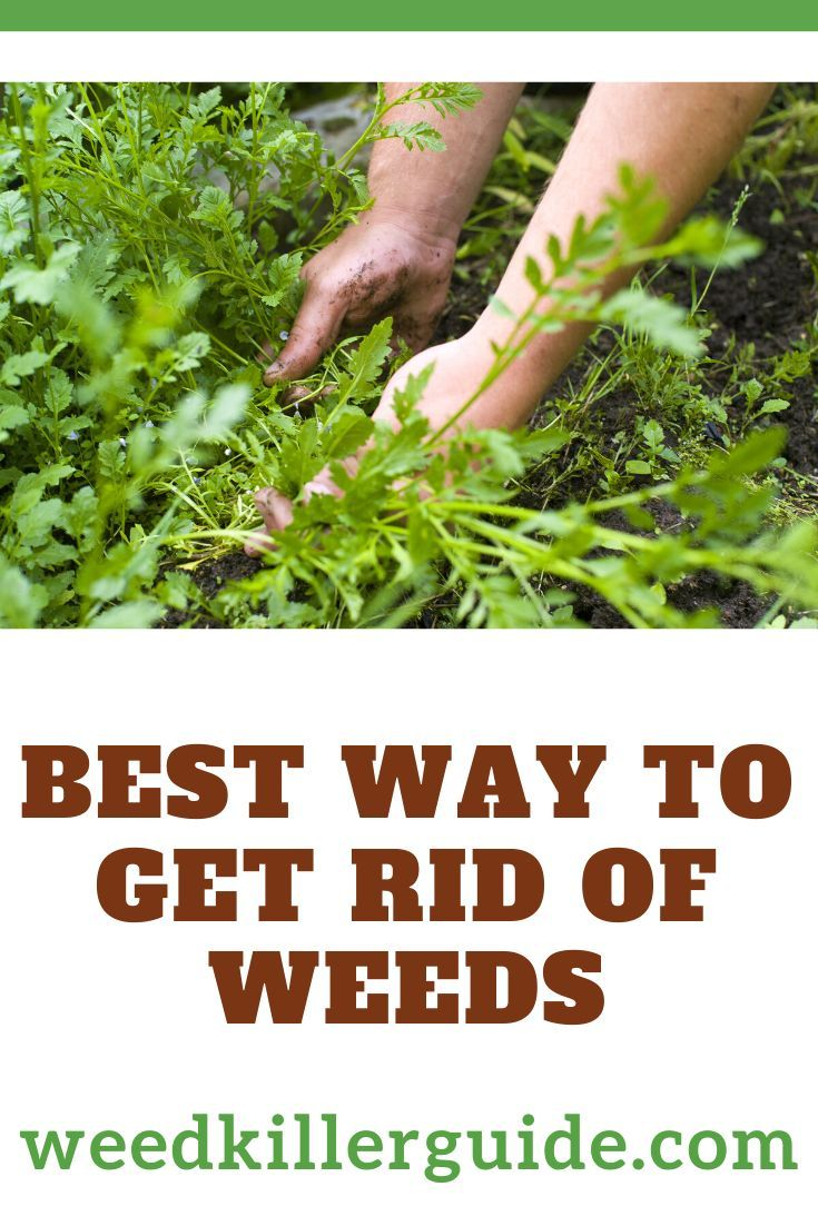 Pin On Best Of Weed Killer Guide