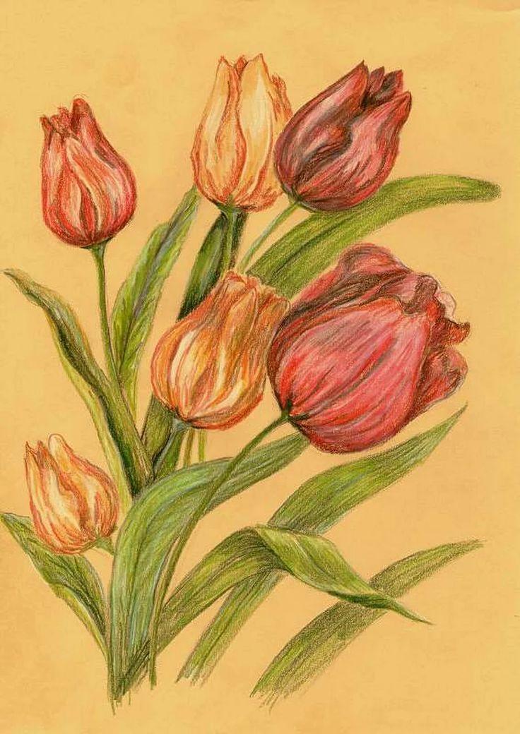 kwiaty, tulipany, kredka, pastelowe tło