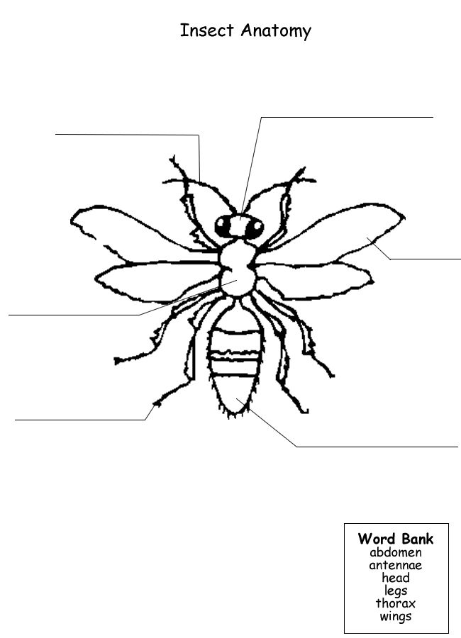 Printables Insect Body Parts Worksheet 1000 images about bugs insects and spiders on pinterest printable worksheet to label parts of an insect free unit