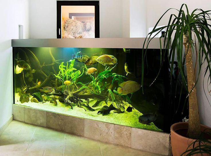 Die besten 25+ Aquarium zubehör Ideen auf Pinterest Aquarium - deko fur aquarium selber machen