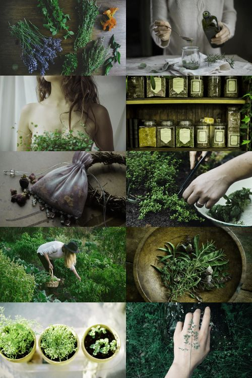 skcgsra: herbalist aesthetic (requested) more here // request...