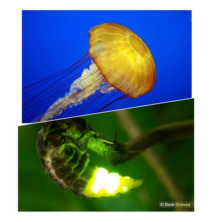 Az élőlények egy része különféle biokémiai folyamatok révén világítani képes.Ilyen például a Magyarországon is élő szentjánosbogár. Egyes mélytengeri állatok is képesek fény kibocsátására