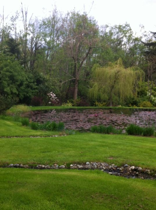 17 Best Images About Soos Creek Botanical Garden On Pinterest Green River Places And Planters